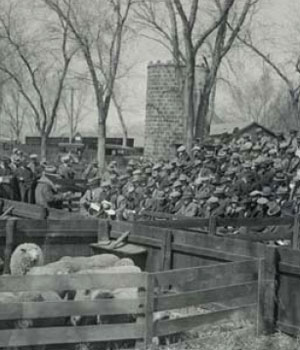 Historical image of Sheep Feeders Day