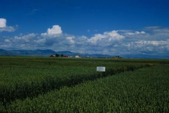 field with mountains